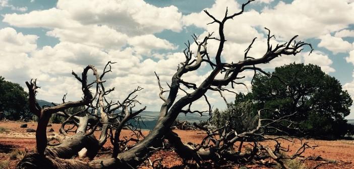 a dry spell caregiver