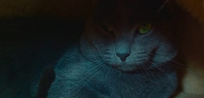 mysterious cat in the night