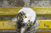 Cat Caregiver